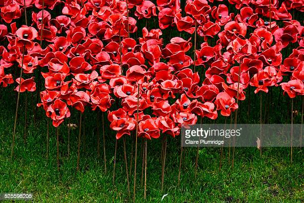 'Blood Swept Lands and Seas of Red' Marks 100 years since the first full day of Britains involvement in the First World War. 888,246 ceramic poppies...