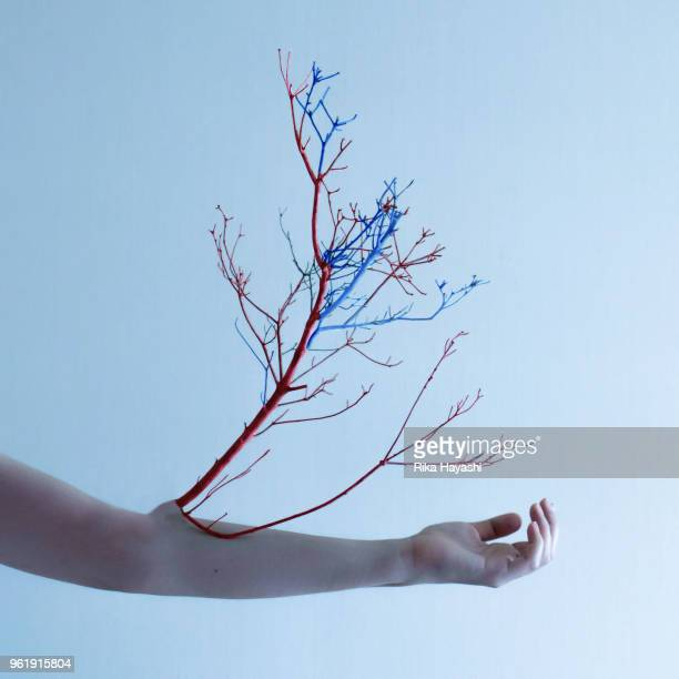blood vessels growing from the body - limb body part stock pictures, royalty-free photos & images