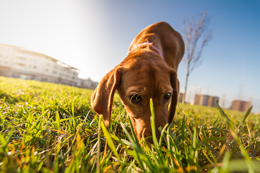 Simple Ways to Remove Dog Urine Stains & Odors
