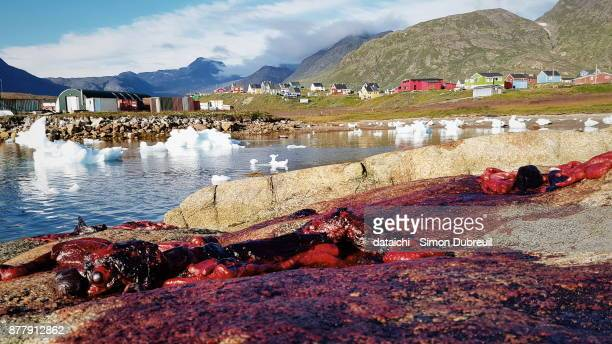 Bloody rocks arfter seal hunt in Narsaq