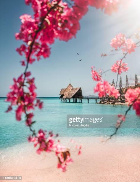 bloom in new caledonia - new caledonia fotografías e imágenes de stock