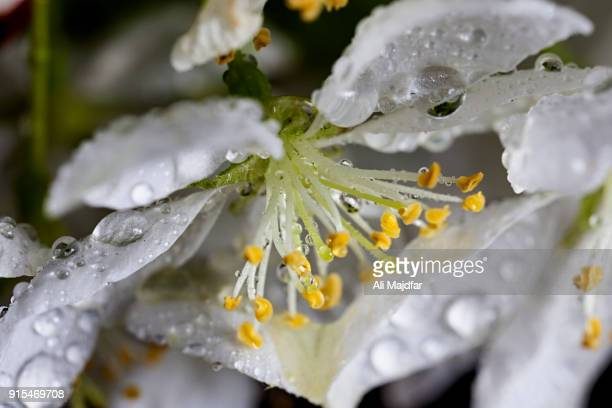 bloom - apple blossom stock pictures, royalty-free photos & images