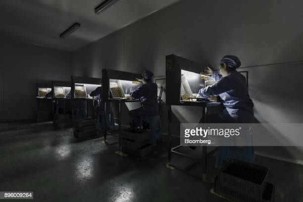 Employees examine vials of adrenaline hydrochloride injection solution at a China Grand Pharmaceutical and Healthcare Holdings Ltd facility in Wuhan...