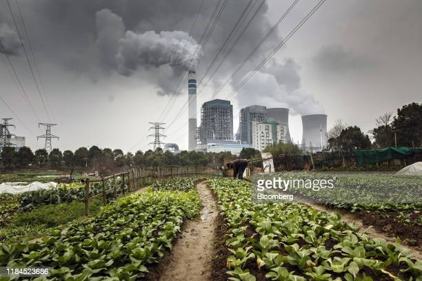 A man tends to vegetables in a field as emissions rise from nearby cooling towers of a coalfired power station in Tongling Anhui province China on...