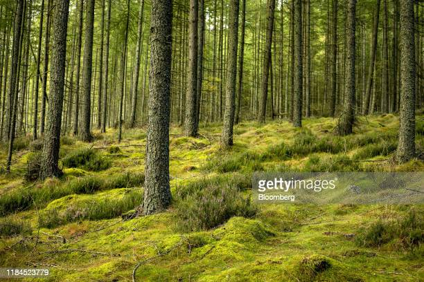 Green moss and trees in the forest that surround the Bennachie Visitor Centre near Inverurie UK on Monday Sept 30 2019 Photographer Hollie...