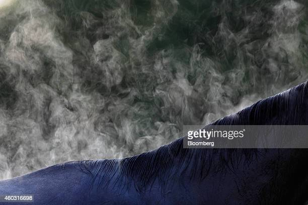 Bloomberg's Best Photos 2014: Steam rises from a thoroughbred racehorse after morning workouts on the day of the 140th running of the Kentucky Derby...