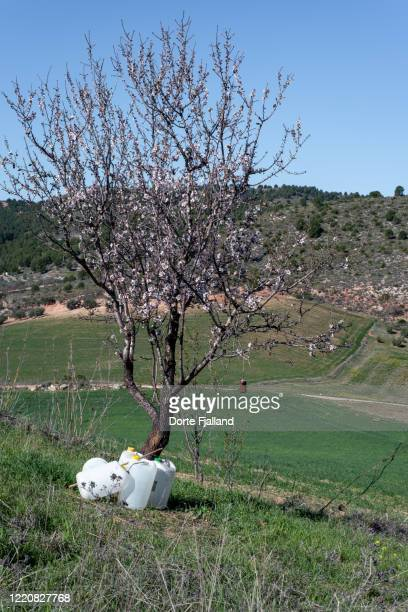 blooming almond tree surrounded by white plastic bottles - dorte fjalland stock pictures, royalty-free photos & images