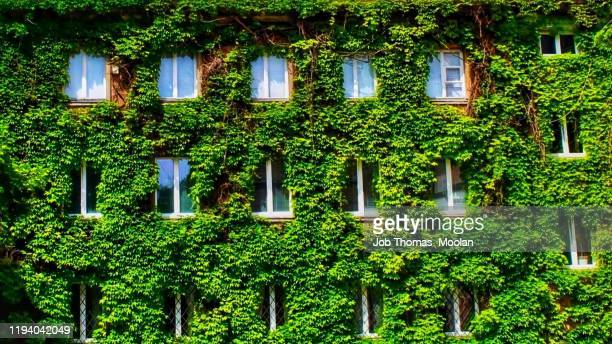 blooming building brings the nature out - sustainable architecture stock pictures, royalty-free photos & images