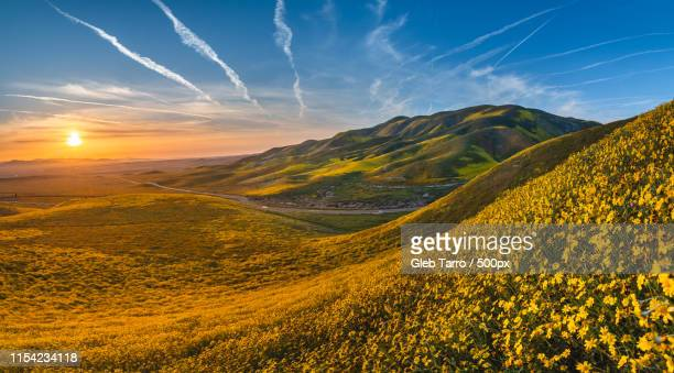 blooming california - カリフォルニア ストックフォトと画像