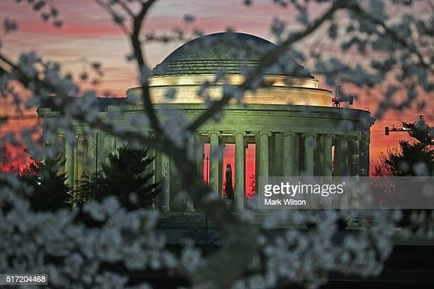 Blooming Cherry Blossoms are visible as the early morning sun rises behind the Jefferson Memoriall March 24 2016 in Washington DC The National Park...