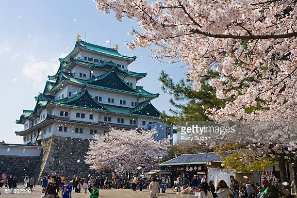 Blooming Cherry Tree at Nagoya Castle