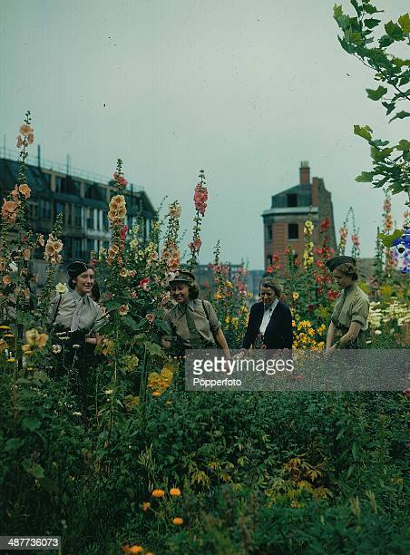 Blooming city garden planted by the community on a bomb site somewhere in England during World War Two, August 1944.