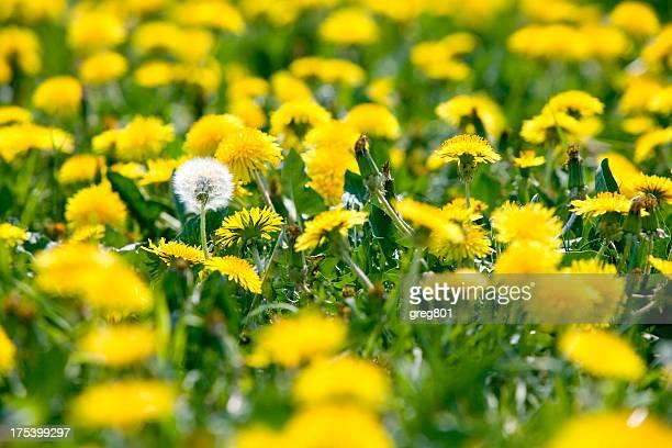 Blühende am Rand