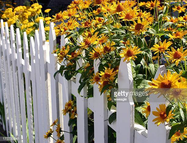 Blooming Fence of Flowers