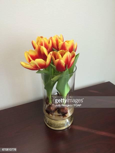 blooming flower plant in glass jar - blumenzwiebel stock-fotos und bilder