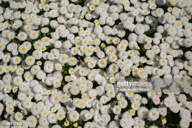 blooming flowers as a background - as stock pictures, royalty-free photos & images