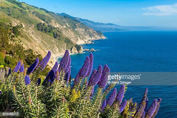 Blooming flowers in Big Sur California