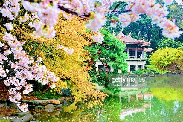 Blooming flowers of Sakura, colourful trees, Taiwan Pavilion and its reflection in the lake