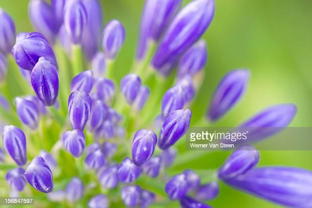 blooming flowers - nature stockfoto's en -beelden
