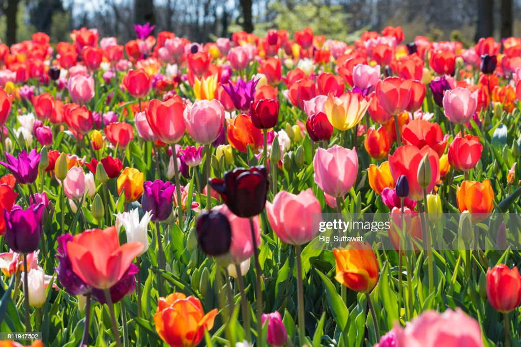 Blooming flowers : Stock Photo