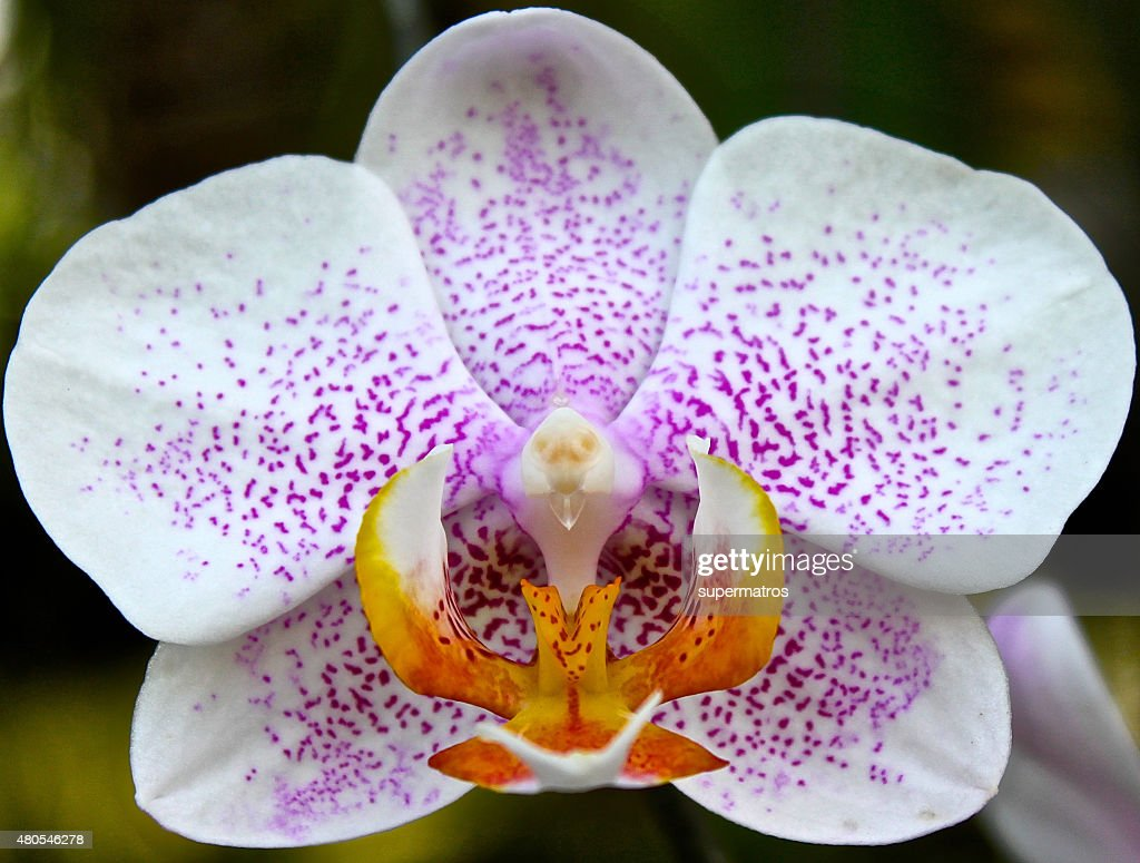 Blooming gorgeous garden of orchids in a greenhouse : Stock Photo