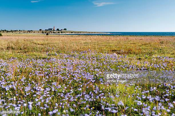 Blooming meadow on coast