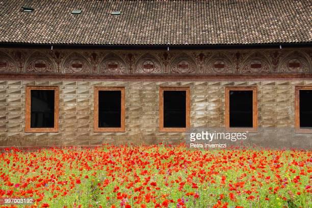 blooming milan - petra invernizzi foto e immagini stock