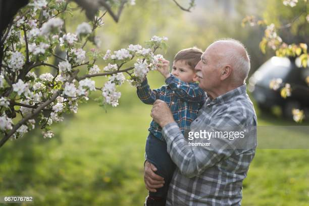 blooming orchard - blossom stock pictures, royalty-free photos & images