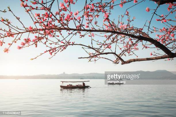 blooming peach blossoms and boats, spring west lake, hangzhou, china - peach blossom stock pictures, royalty-free photos & images