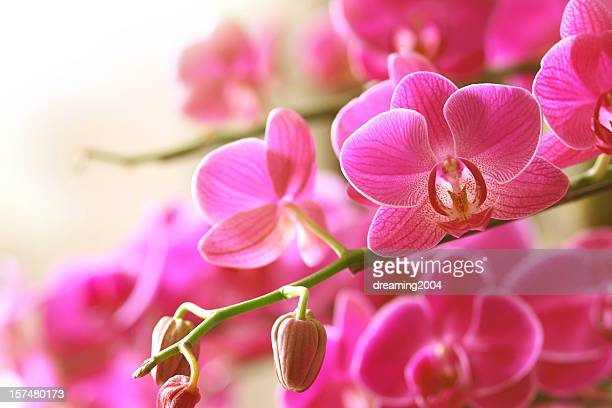 blooming pink orchid on a green branch - orchid flower stock pictures, royalty-free photos & images