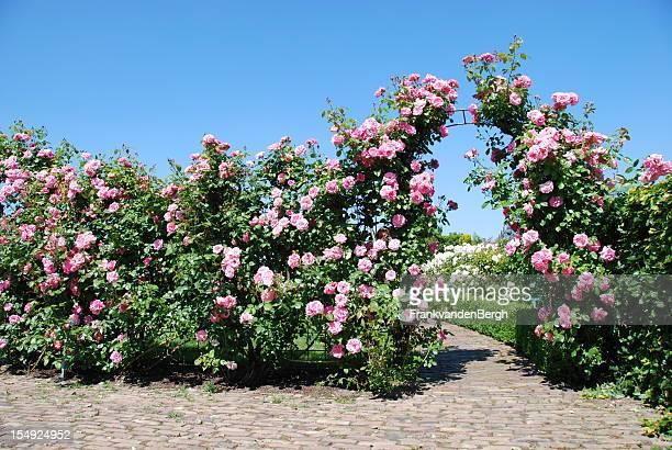 Blühende Rose Garden