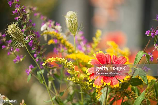 blooming summer garden bed - goldenrod stock pictures, royalty-free photos & images