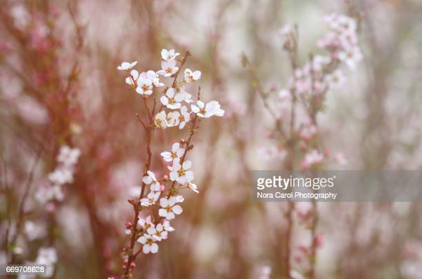 Blooming tree branches with flowers