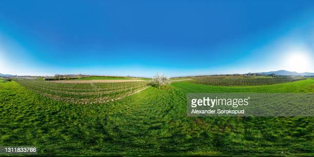 blooming trees, white balls on a background of green grass. apple trees, cherries. top view from the drone. alsace. france. 360-degree. - 360 fotografías e imágenes de stock