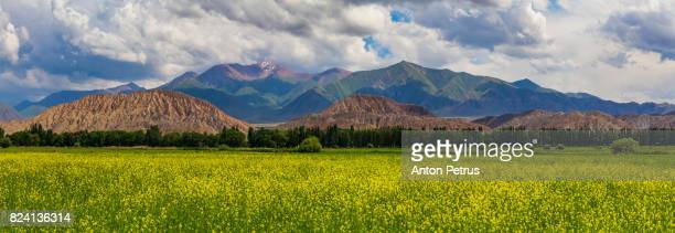 Blooming valley with green mountains. Kyrgyzstan, summer