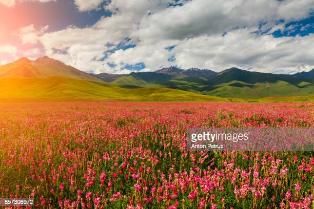 Blooming valley with green mountains
