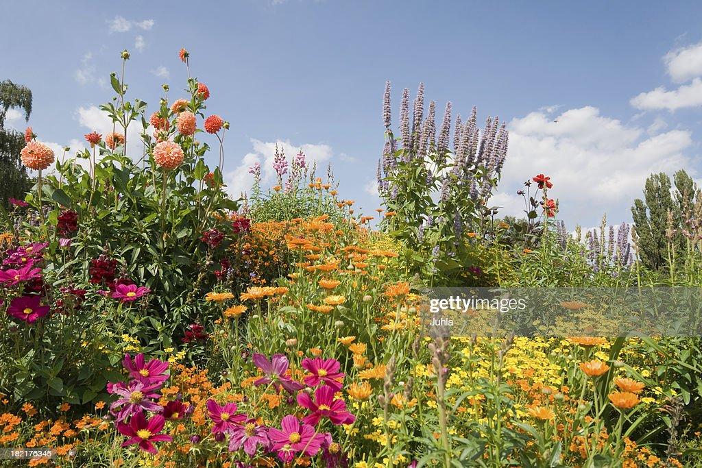 Bloomy ガーデン : ストックフォト