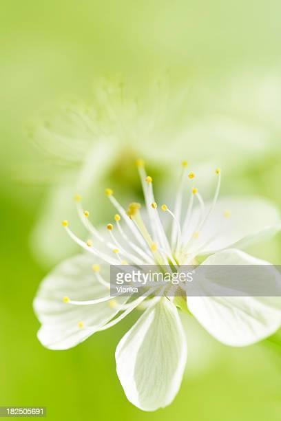 Fond fleur