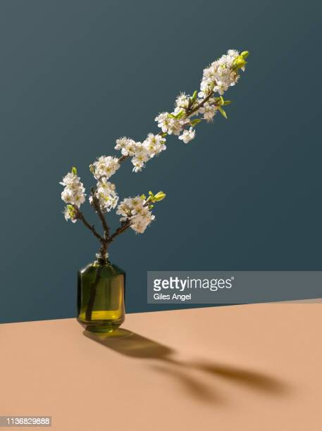 blossom in glass bottle - still life stock pictures, royalty-free photos & images