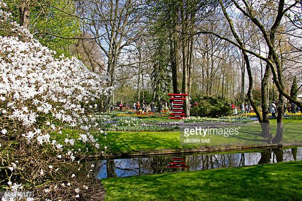 blossoming Magnolia stream tulips hyacinths daffodils Visitors Keukenhof 2161 AM Lisse The Netherlands Finally spring Keukenhof is full in bloom...