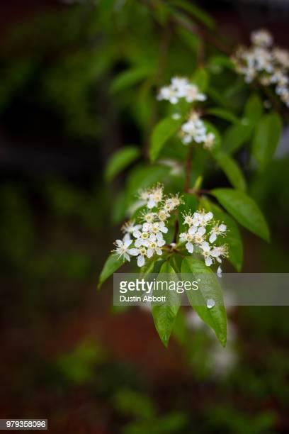 blossoming - dustin abbott imagens e fotografias de stock