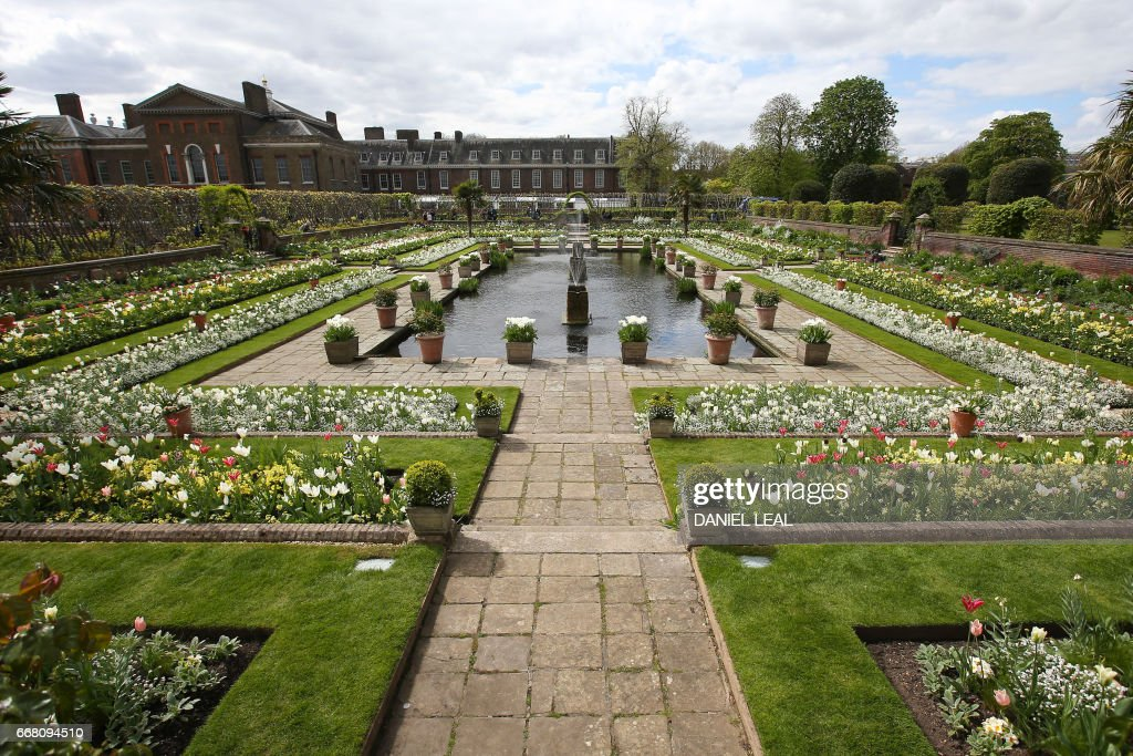 Blossoms are seen in the White Garden, created to celebrate the life of Diana, Princess of Wales, at Kensington Palace in north London on April 13, 2017. Formerly known as the Sunken Garden, the White Garden was created with thousands of white flowers and foliage to mark the 20th anniversary of the death of Diana, Princess of Wales in August 1997. / AFP PHOTO / Daniel LEAL