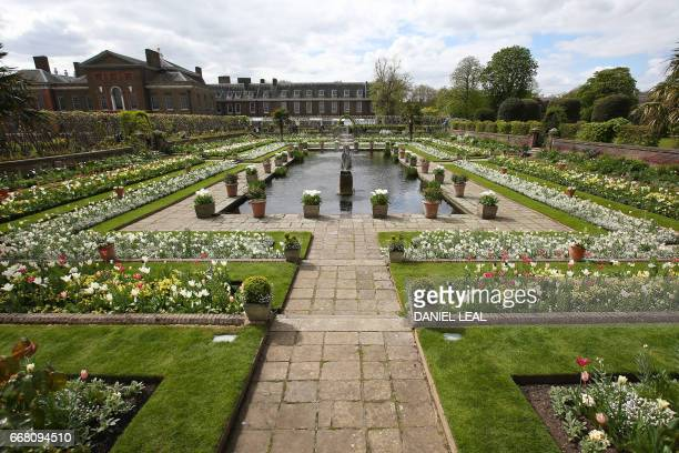 Blossoms are seen in the White Garden created to celebrate the life of Diana Princess of Wales at Kensington Palace in north London on April 13 2017...