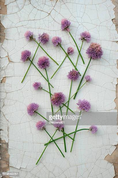 Blossoms of chives