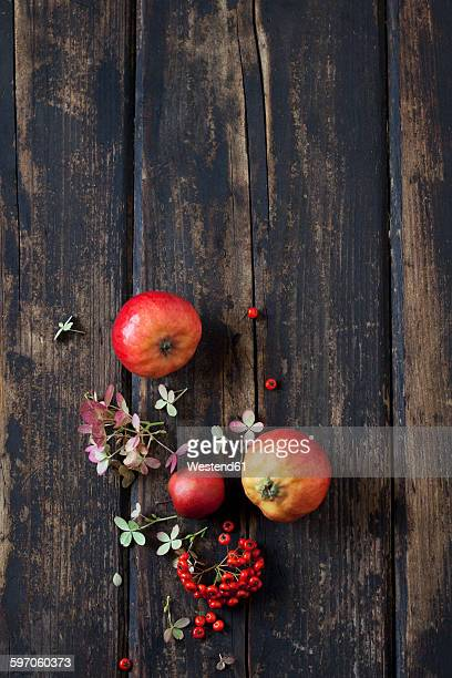 Blossoms of Hydrangea, firethorn and red apples on dark wood