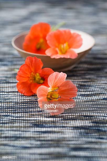 blossoms of nasturtium, edible - nasturtium stock pictures, royalty-free photos & images