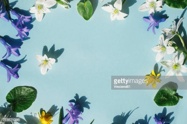 Blossoms on light blue background