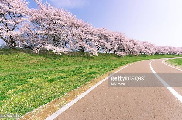 Blossoms Road