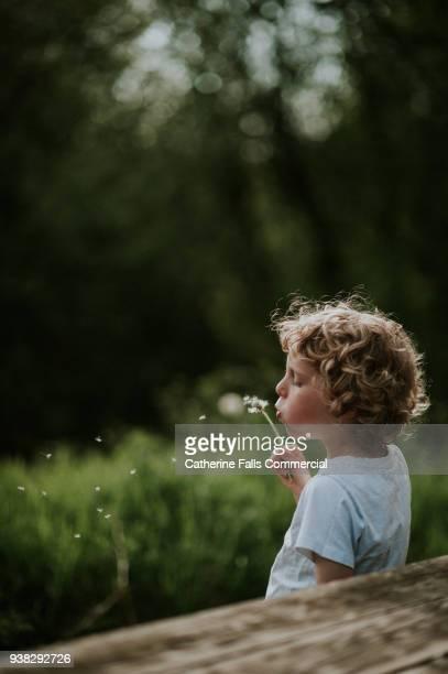 blowing dandelions - soffiare foto e immagini stock