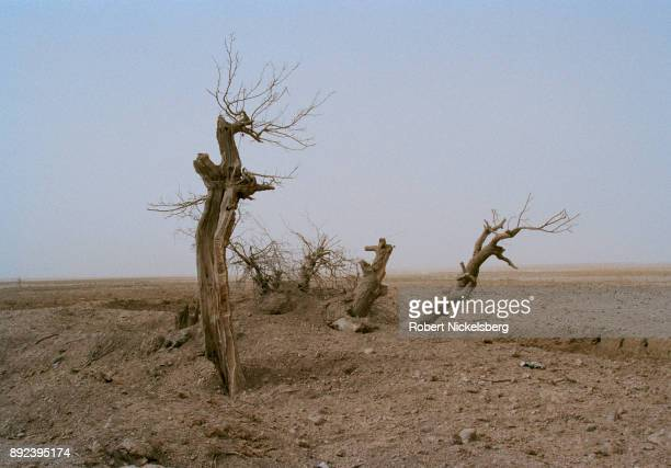 Blown apart trees and shattered stone walls are seen in an area bombed by US aircraft November 1 2001 in the village of Chowkar Karez Kandahar...